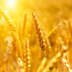 secteur-agricole-athelyor-elyor-energy